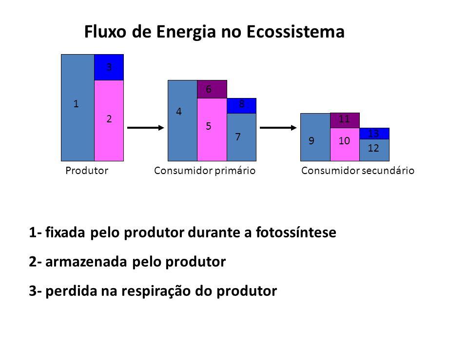 Fluxo de Energia no Ecossistema ProdutorConsumidor primárioConsumidor secundário 1 2 3 4 5 6 7 8 910 11 12 13 1- fixada pelo produtor durante a fotossíntese 2- armazenada pelo produtor 3- perdida na respiração do produtor