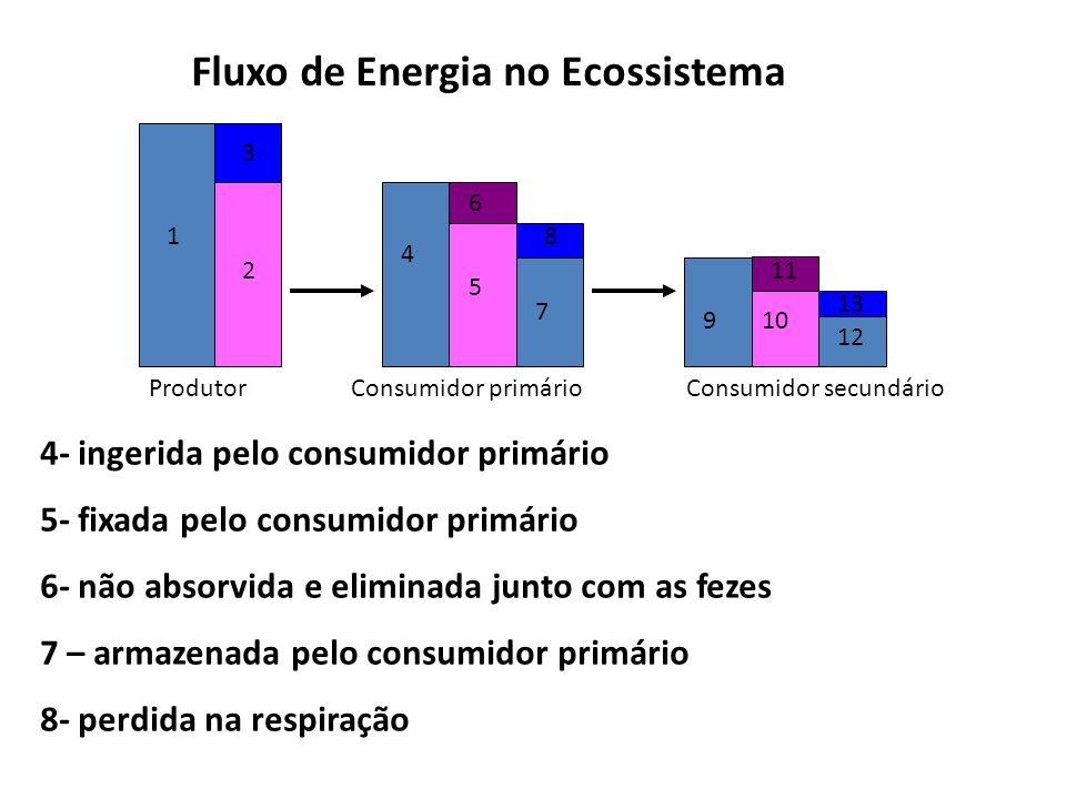 Fluxo de Energia no Ecossistema ProdutorConsumidor primárioConsumidor secundário 1 2 3 4 5 6 7 8 910 11 12 13 9- ingerida pelo consumidor secundário 10- fixada pelo consumidor secundário 11- não absorvida e eliminada junto com as fezes 12- armazenada pelo consumidor secundário 13- perdida na respiração