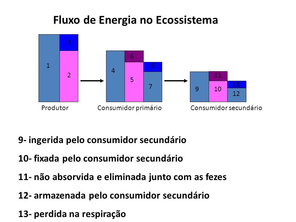 Fluxo de Energia no Ecossistema ProdutorConsumidor primárioConsumidor secundário 1 2 3 4 5 6 7 8 910 11 12 13 9- ingerida pelo consumidor secundário 1