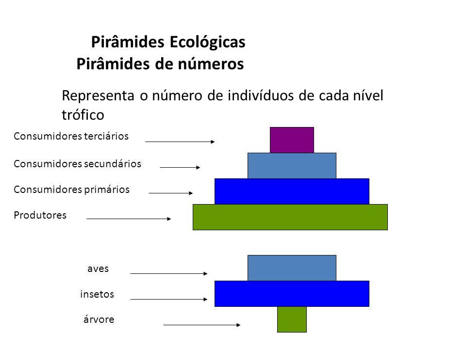 Pirâmides Ecológicas Pirâmides de números Produtores Consumidores primários Consumidores secundários Consumidores terciários árvore insetos aves Repre