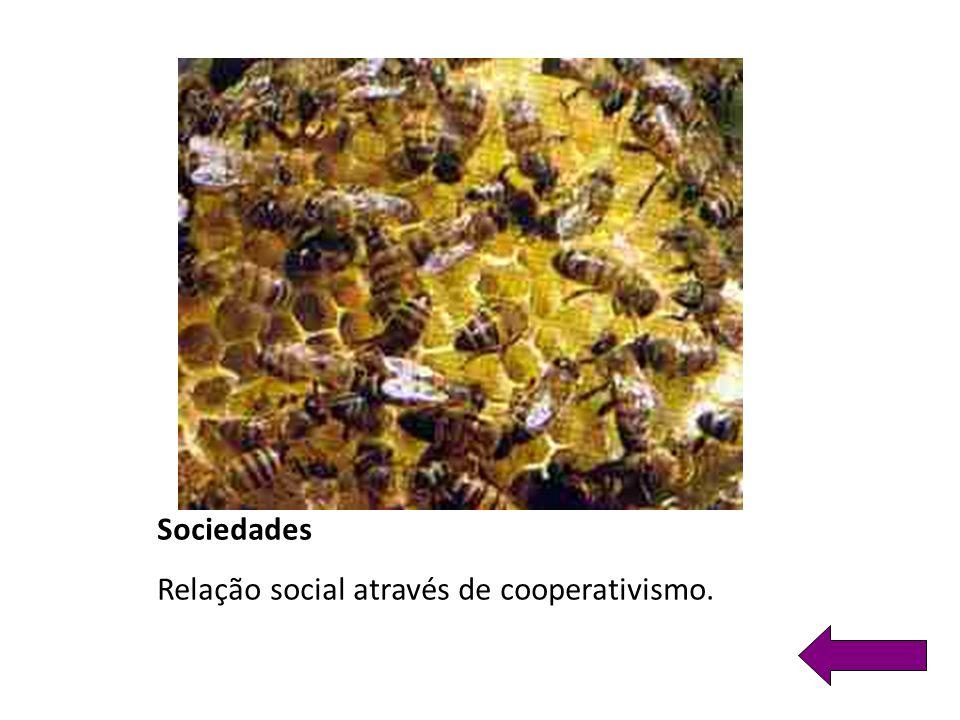 Sociedades Relação social através de cooperativismo.