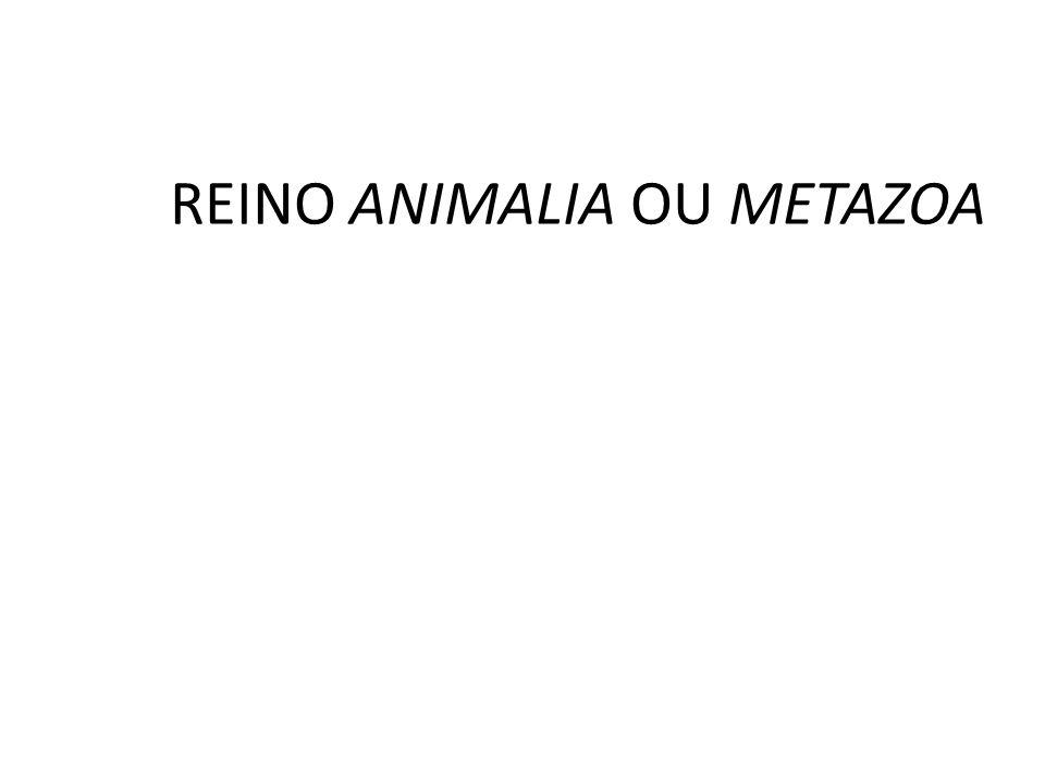 Classificação dos animais Quanto a presen ç a de notocorda (eixo de sustenta ç ão corporal nos embriões): Cordados: notocorda presente nos embriões; Invertebrados: ausência de notocorda na fase embrion á ria.