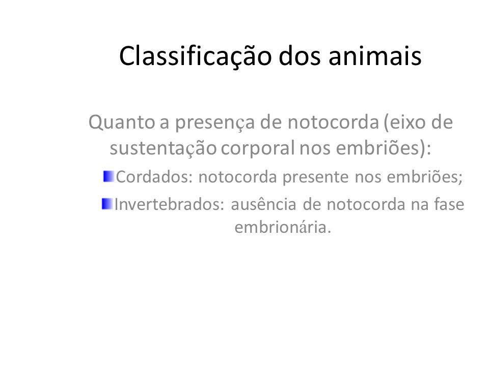 Os cordados – protocordados e vertebrados –.
