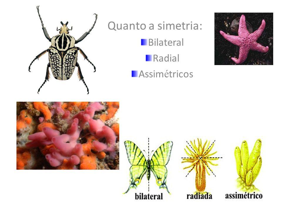 Culex sp. NEMATÓDEOS Elefantíase, Bancroftíase, Filariose ou Wuchereríase