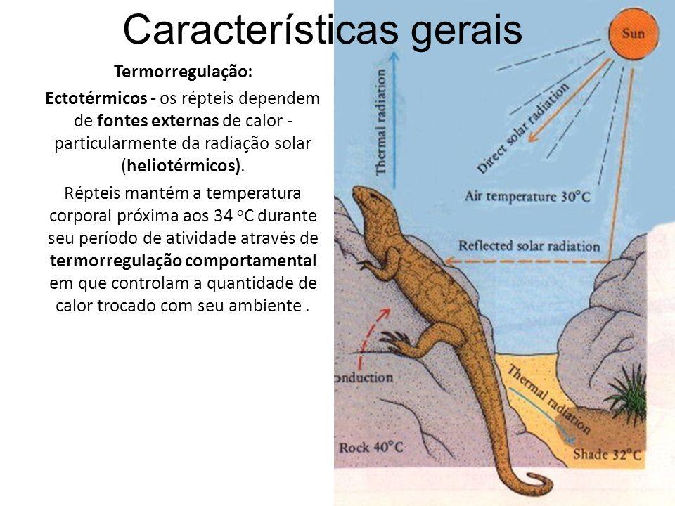 Termorregulação: Ectotérmicos - os répteis dependem de fontes externas de calor - particularmente da radiação solar (heliotérmicos).