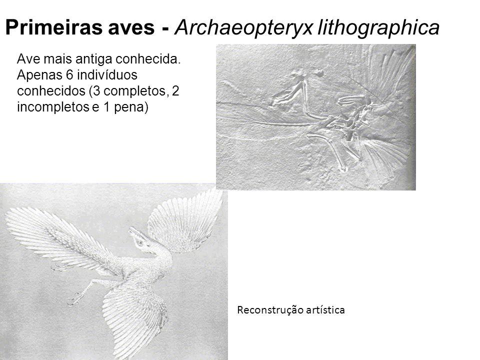 Reconstrução artística Ave mais antiga conhecida.