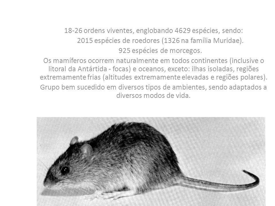 18-26 ordens viventes, englobando 4629 espécies, sendo: 2015 espécies de roedores (1326 na família Muridae).