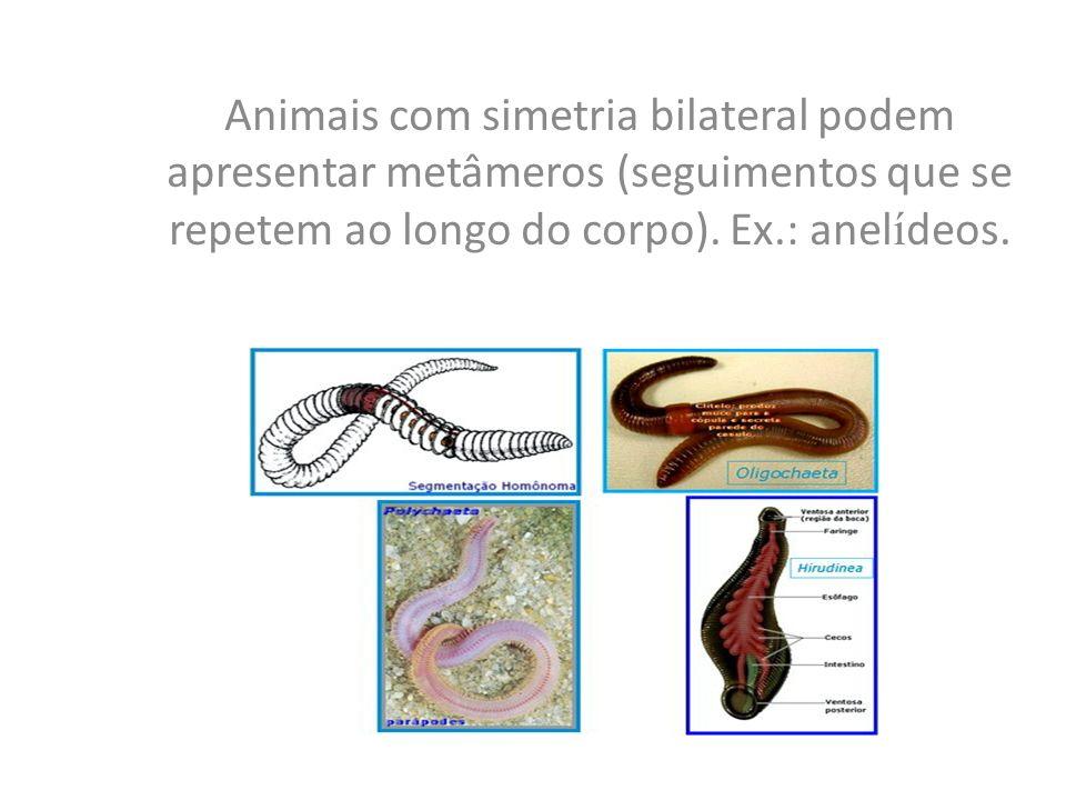 Subfilo Vertebrata - Classe Agnatha Peixes sem mandíbulas: Feiticeiras e lampréias Duas linhagens evolutivas distintas.
