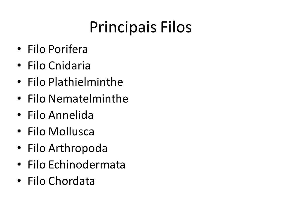 Asquelmintos (Nematódeos) Características Gerais Eumetazoários Triblásticos Pseudocelomados Protostômios Simetria bilateral Sem metameria