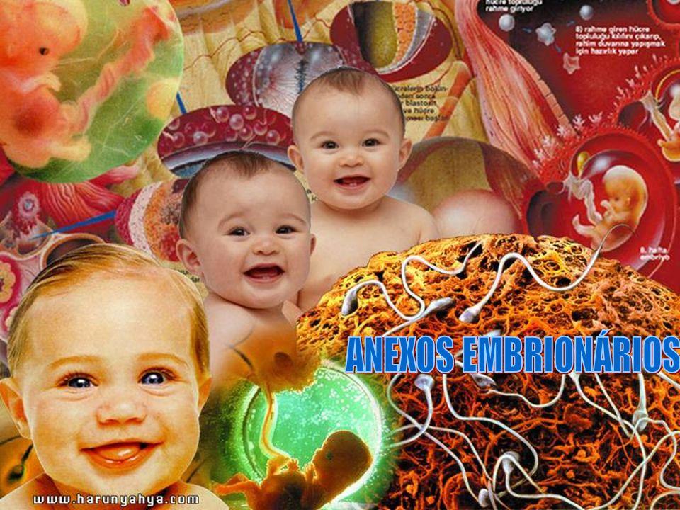 Placenta Alantóide Saco vitelino Vasos sangüíneos maternos Cavidade amniótica Âmnio Embrião Córion Vilosidades coriônicas PLACENTA É composta por uma parte fetal e de uma parte materna.