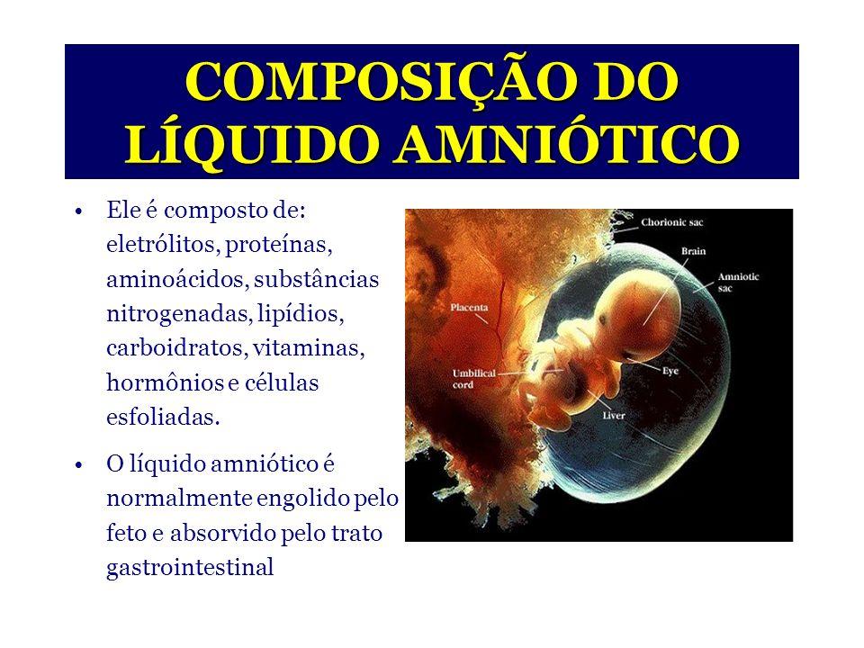 ÂMNIO E LÍQUIDO AMNIÓTICO Origem: Surge entre o embrioblasto e o trofoblasto no pólo embrionário.