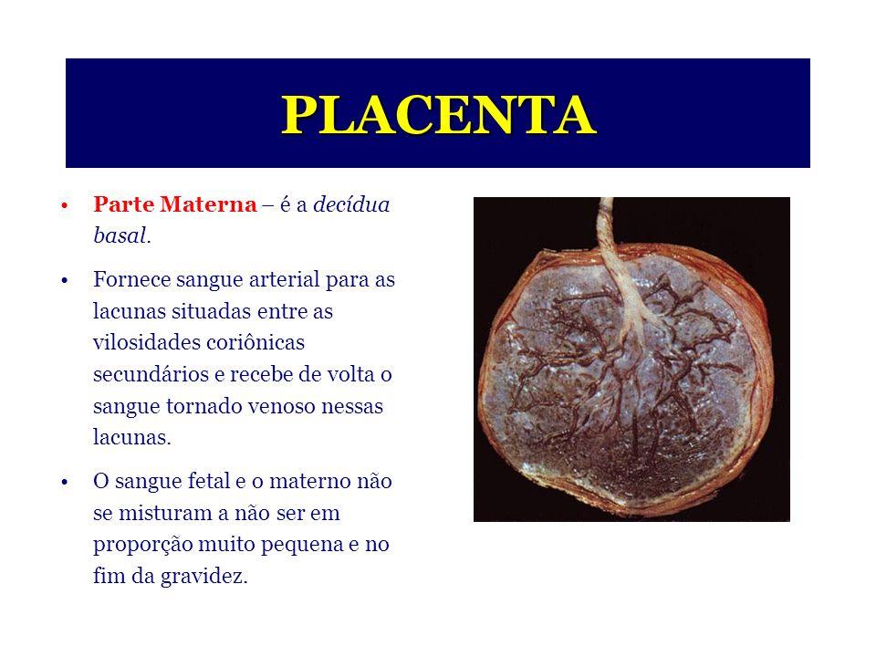 PLACENTA Parte Fetal – é formada pelo córion.
