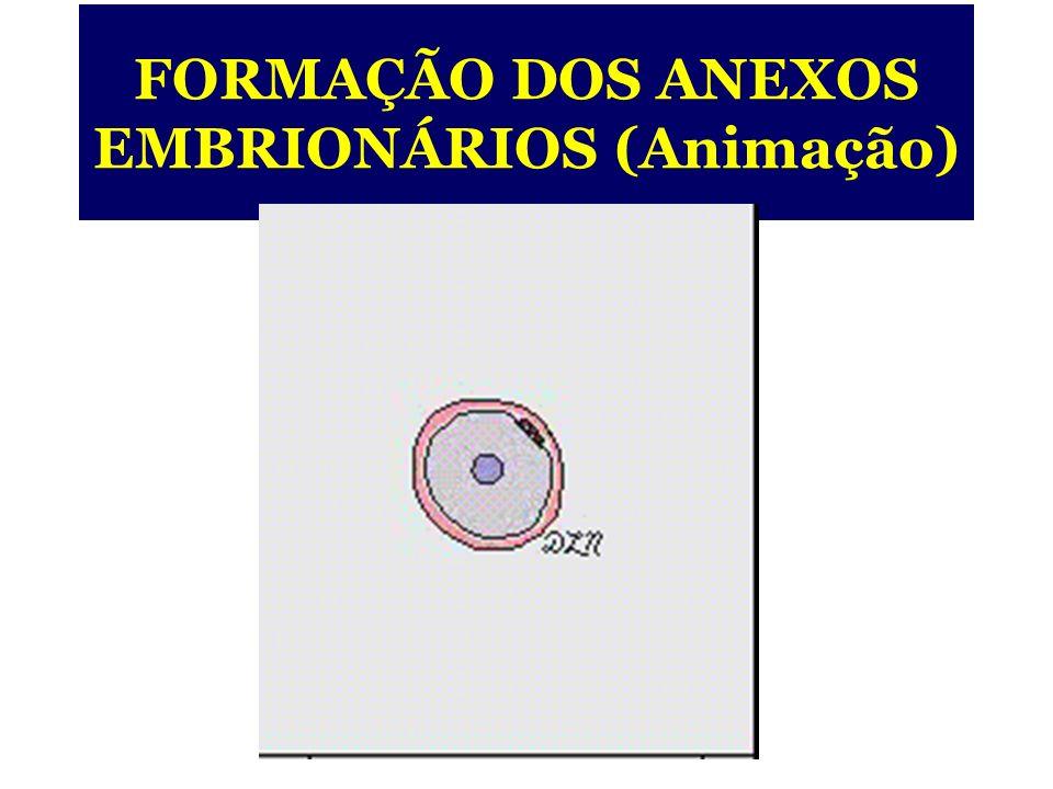 ENDOMÉTRIO Futuro embrião Futuro saco vitelino Sinciciotrofoblasto Citotrofoblasto CAVIDADE UTERINA Vaso sangüíneo (materno) EMBRIÃO DIDÉRMICO