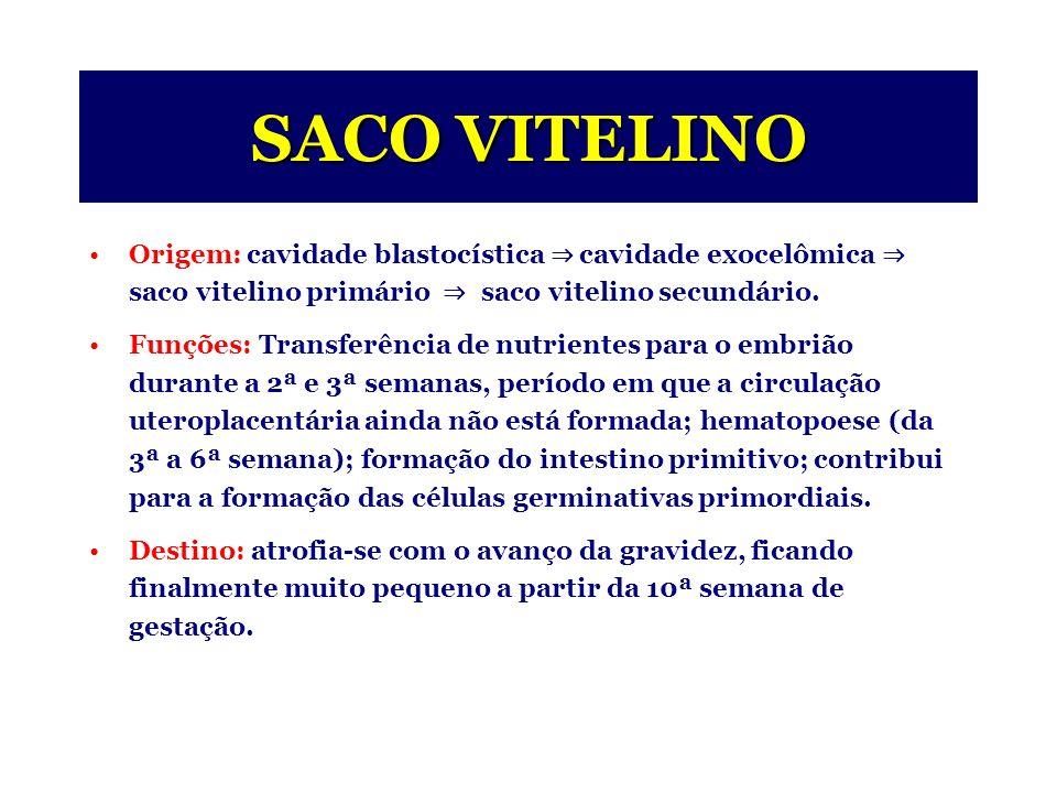 SACO VITELINO Origem: cavidade blastocística cavidade exocelômica saco vitelino primário saco vitelino secundário.