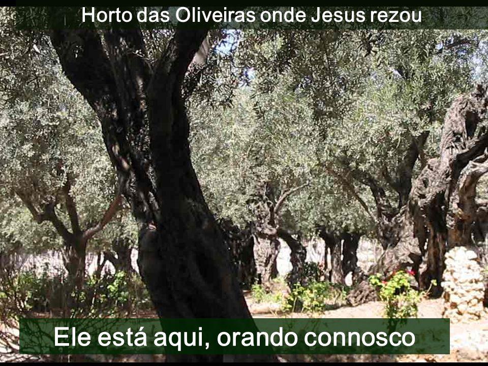MAR MEDITERRANI - Há que entrar pela porta estreita (Dom 21) - Convidados para o Banquete do Reino (Dom 22) - Condições para participar (Dom 23) - Os