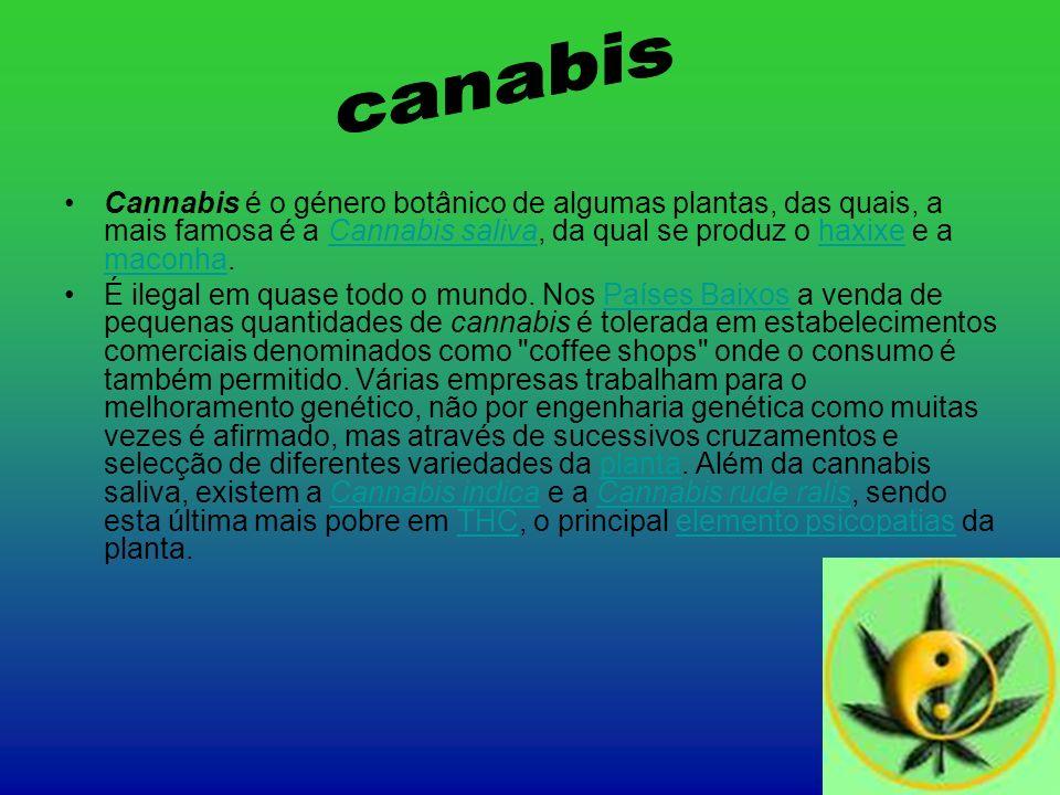 Cannabis é o género botânico de algumas plantas, das quais, a mais famosa é a Cannabis saliva, da qual se produz o haxixe e a maconha.Cannabis salivah