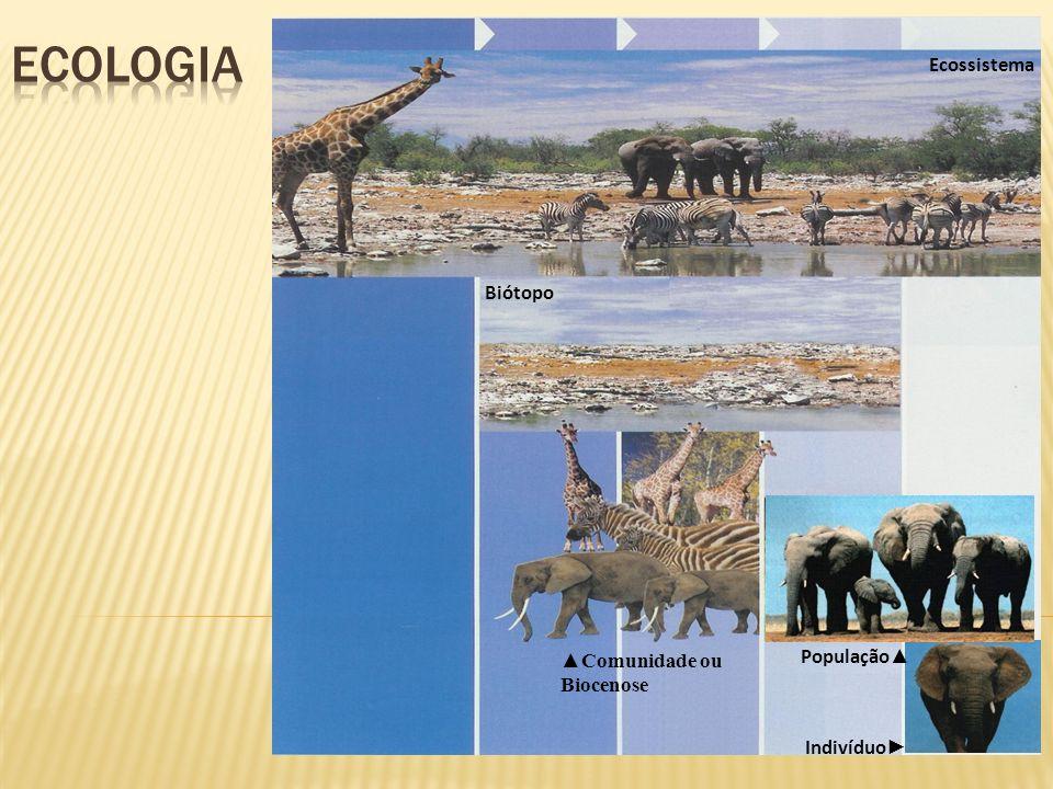 FACTOR BIÓTICO Organização dos seres vivos num ecossistema Os ecossistemas estão organizados em comunidades.