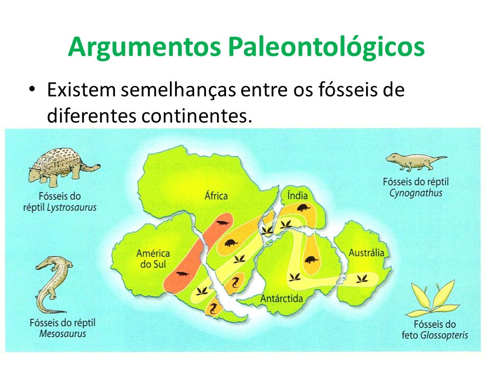 Argumentos Paleontológicos Existem semelhanças entre os fósseis de diferentes continentes.