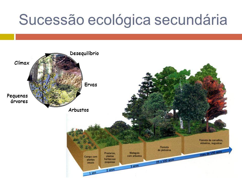 Sucessão ecológica secundária Pequenas árvores Clímax Arbustos Ervas Desequilíbrio