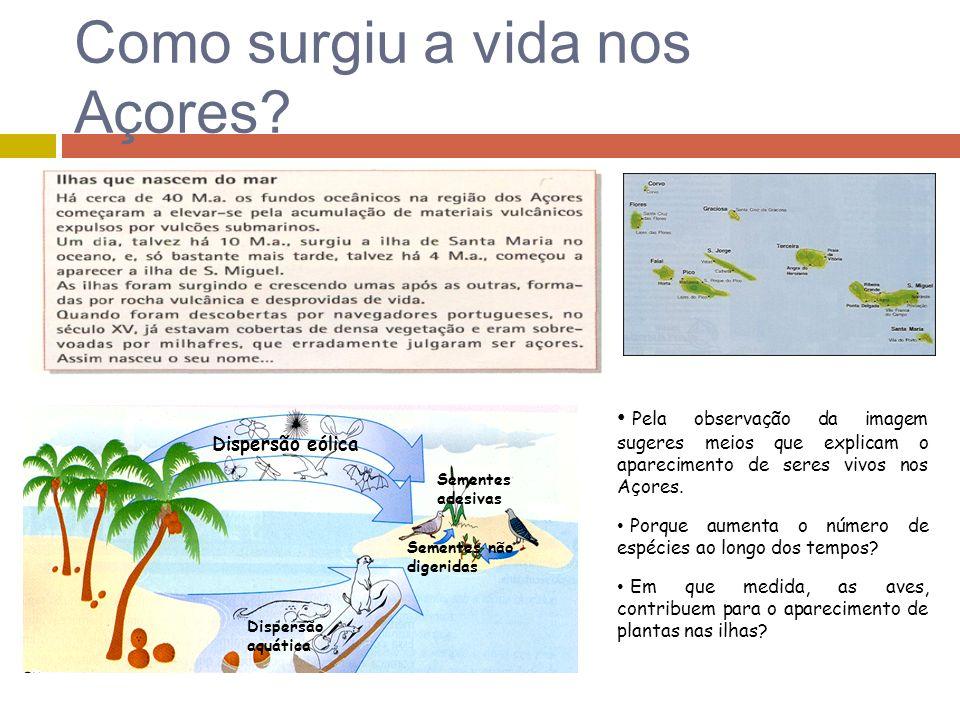 Como surgiu a vida nos Açores? Sementes adesivas Sementes não digeridas Dispersão eólica Dispersão aquática Pela observação da imagem sugeres meios qu