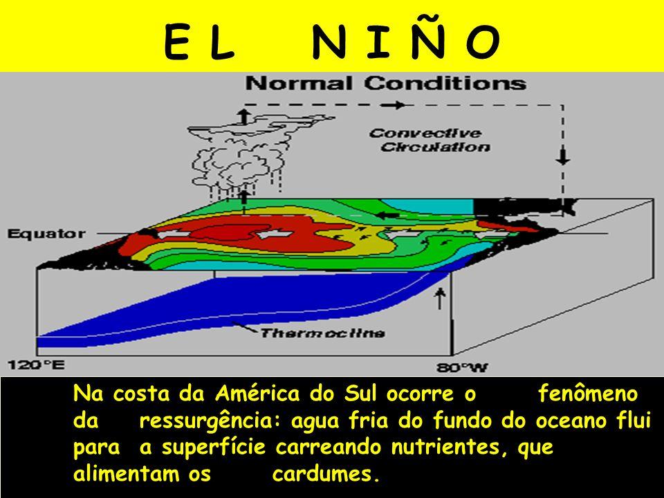 E L N I Ñ O Na costa da América do Sul ocorre o fenômeno da ressurgência: agua fria do fundo do oceano flui para a superfície carreando nutrientes, qu