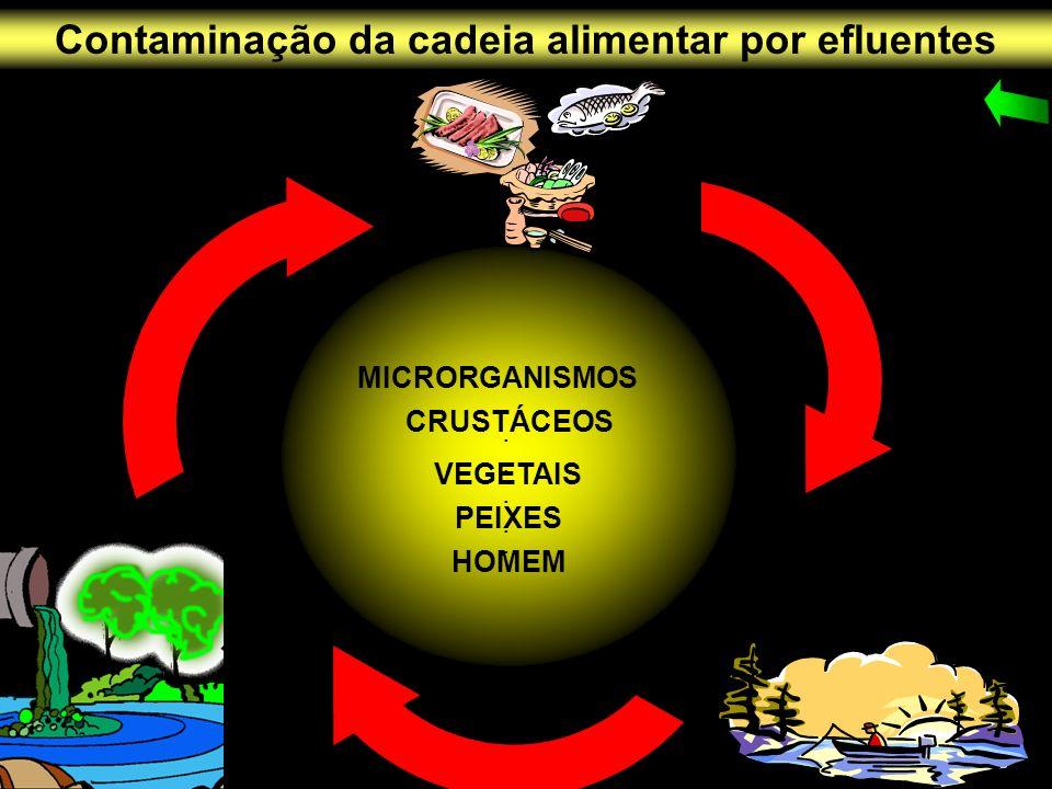 · MICRORGANISMOS · CRUSTÁCEOS · VEGETAIS · PEIXES · HOMEM Contaminação da cadeia alimentar por efluentes