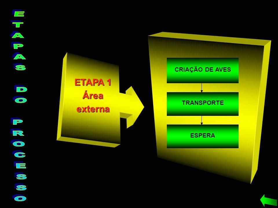 CRIAÇÃO DE AVES TRANSPORTE ESPERA ETAPA 1 Áreaexterna