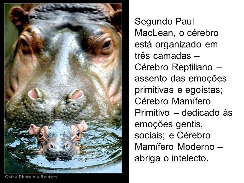 Segundo Paul MacLean, o cérebro está organizado em três camadas – Cérebro Reptiliano – assento das emoções primitivas e egoístas; Cérebro Mamífero Pri