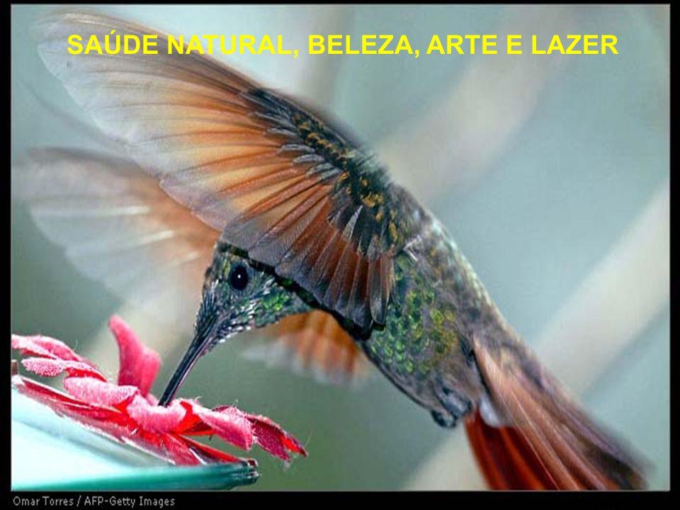SAÚDE NATURAL, BELEZA, ARTE E LAZER