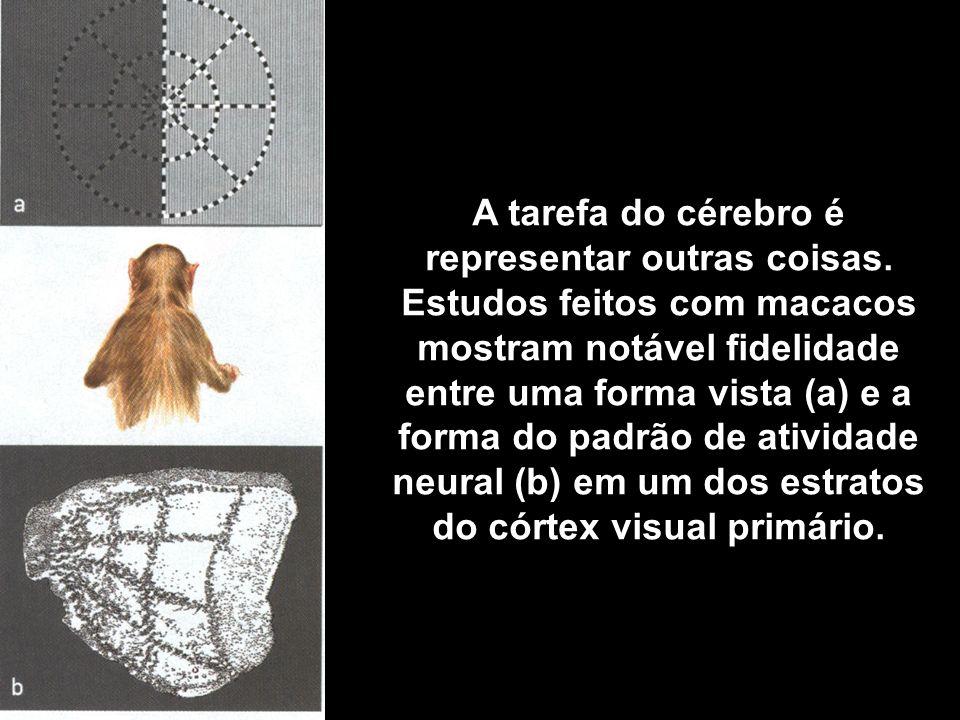 A tarefa do cérebro é representar outras coisas. Estudos feitos com macacos mostram notável fidelidade entre uma forma vista (a) e a forma do padrão d