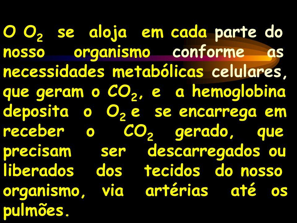 O O 2 se aloja em cada parte do nosso organismo conforme as necessidades metabólicas celulares, que geram o CO 2, e a hemoglobina deposita o O 2 e se