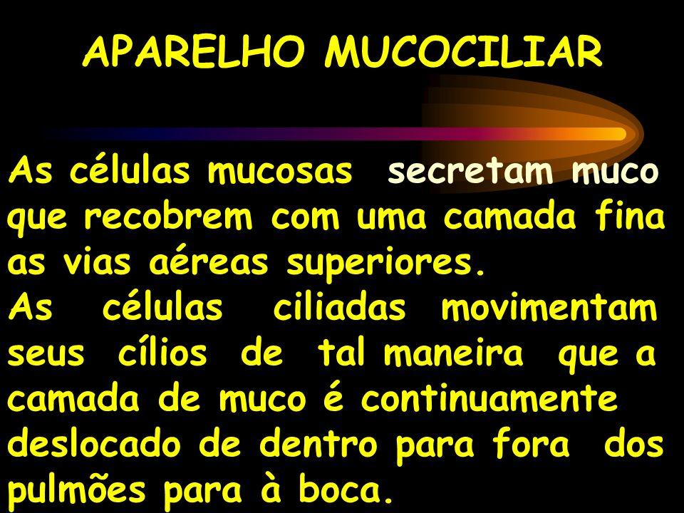 APARELHO MUCOCILIAR As células mucosas secretam muco que recobrem com uma camada fina as vias aéreas superiores. As células ciliadas movimentam seus c