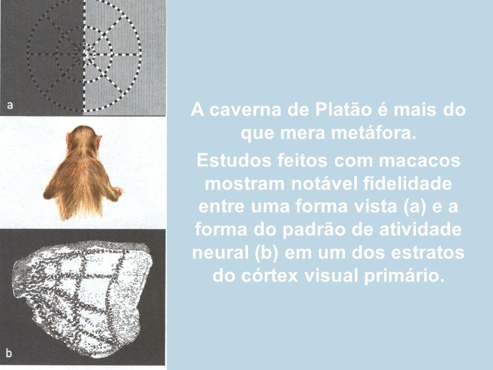 A caverna de Platão é mais do que mera metáfora. Estudos feitos com macacos mostram notável fidelidade entre uma forma vista (a) e a forma do padrão d