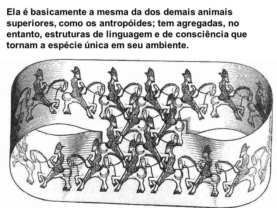 Ela é basicamente a mesma da dos demais animais superiores, como os antropóides; tem agregadas, no entanto, estruturas de linguagem e de consciência q
