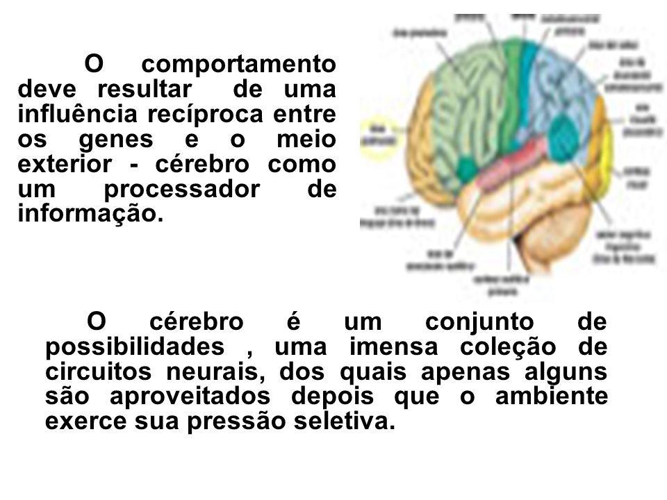 O cérebro é um conjunto de possibilidades, uma imensa coleção de circuitos neurais, dos quais apenas alguns são aproveitados depois que o ambiente exe