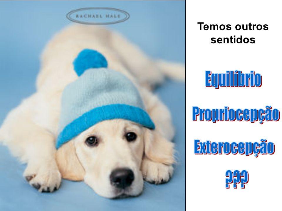 SENTIDOS123 TEMPERATURAX CalorXX FrioXX TOTAL 1.TEORIA CONSERVADORA10 2.TEORIA MODERADA21 3.TEORIA RADICAL33