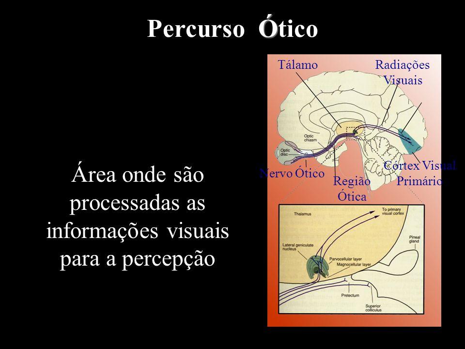 ProcessoFluxo de informação em bits/s Percepção dos órgãos dos sentidos 1.000.000.000 Ligações nervosas3.000.000 Percepção Consciente16 Armazenagem co