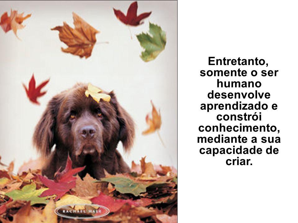 Olfato: ser humano x animal inferior Os animais possuem um sentido de faro superior ao olfato, no ser humano, porém eles se limitam às necessidades in