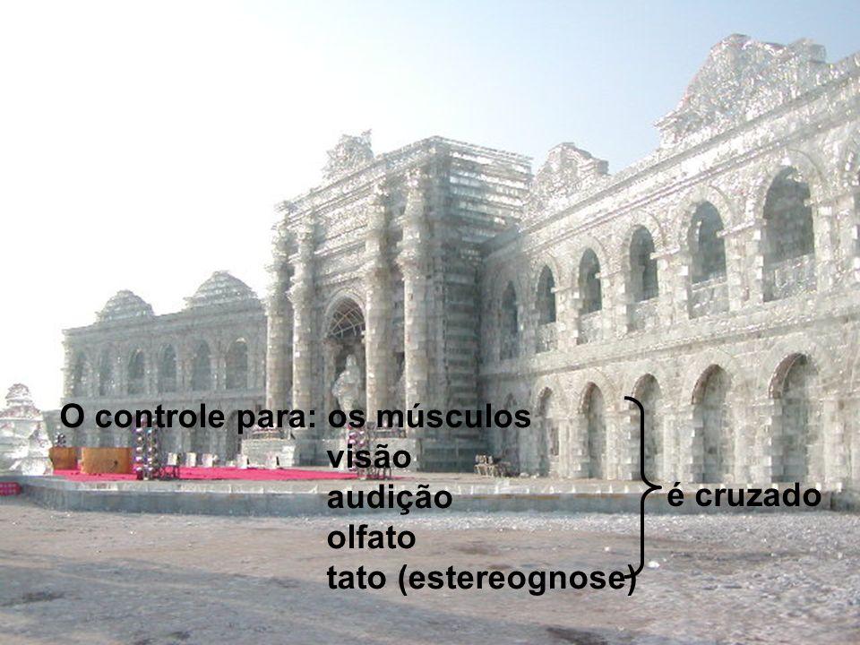 COMPORTAMENTO DO CÉREBRO L.D. do cérebro L.E. do corpo L.E. do cérebro L.D. do corpo controla