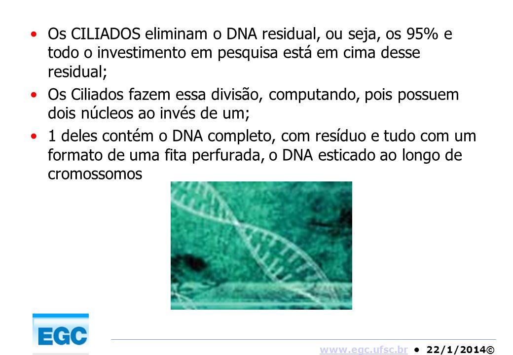 www.egc.ufsc.brwww.egc.ufsc.br 22/1/2014© Os CILIADOS eliminam o DNA residual, ou seja, os 95% e todo o investimento em pesquisa está em cima desse re