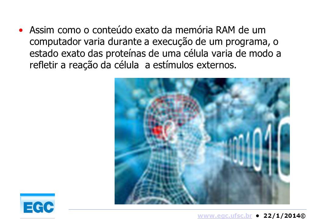 www.egc.ufsc.brwww.egc.ufsc.br 22/1/2014© Assim como o conteúdo exato da memória RAM de um computador varia durante a execução de um programa, o estad