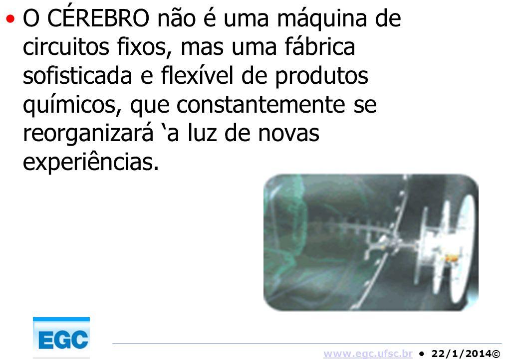 www.egc.ufsc.brwww.egc.ufsc.br 22/1/2014© O CÉREBRO não é uma máquina de circuitos fixos, mas uma fábrica sofisticada e flexível de produtos químicos,