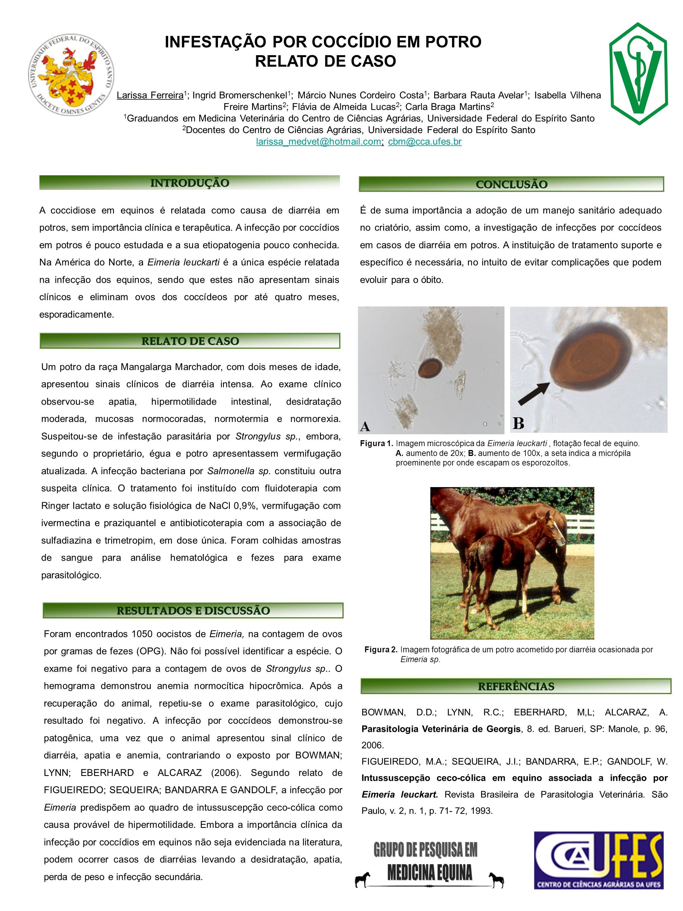 Um potro da raça Mangalarga Marchador, com dois meses de idade, apresentou sinais clínicos de diarréia intensa.