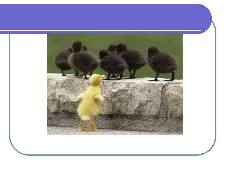 CÍRCULOS de CONSTRUÇÃO de PAZ Filosofia – Kay Pranis, baseia-se: Práticas Restaurativas; Comunicação não- violenta; Escuta qualificada; Construção do consenso; Reaprendizado da convivência; Conexão profunda entre as pessoas, reconhece e explora as diferenças.