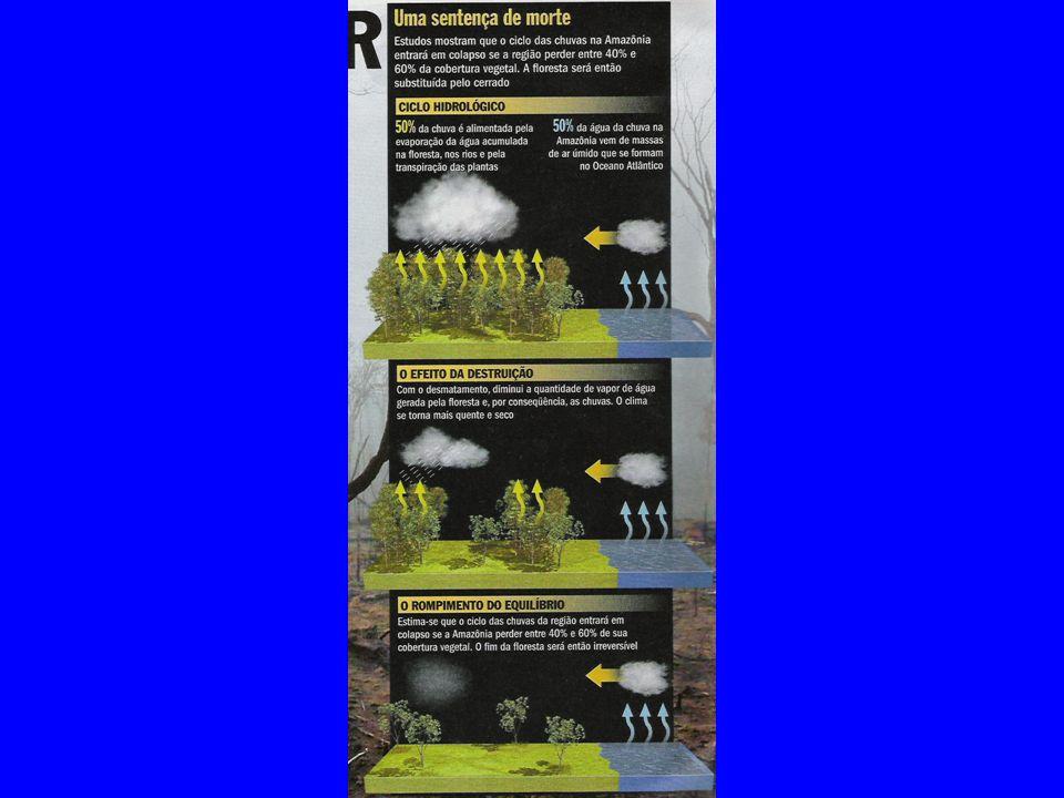 O risco de pagar para ver No ritmo atual, a devastação mudará o ciclo de chuvas e logo poderá ser tarde demais para salvar a Floresta Amazônica Ruth Costas A Floresta Amazônica está sendo devastada como se nunca fosse acabar.