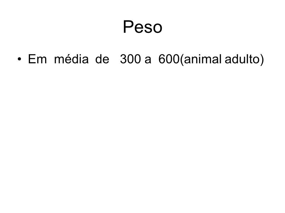 Peso Em média de 300 a 600(animal adulto)