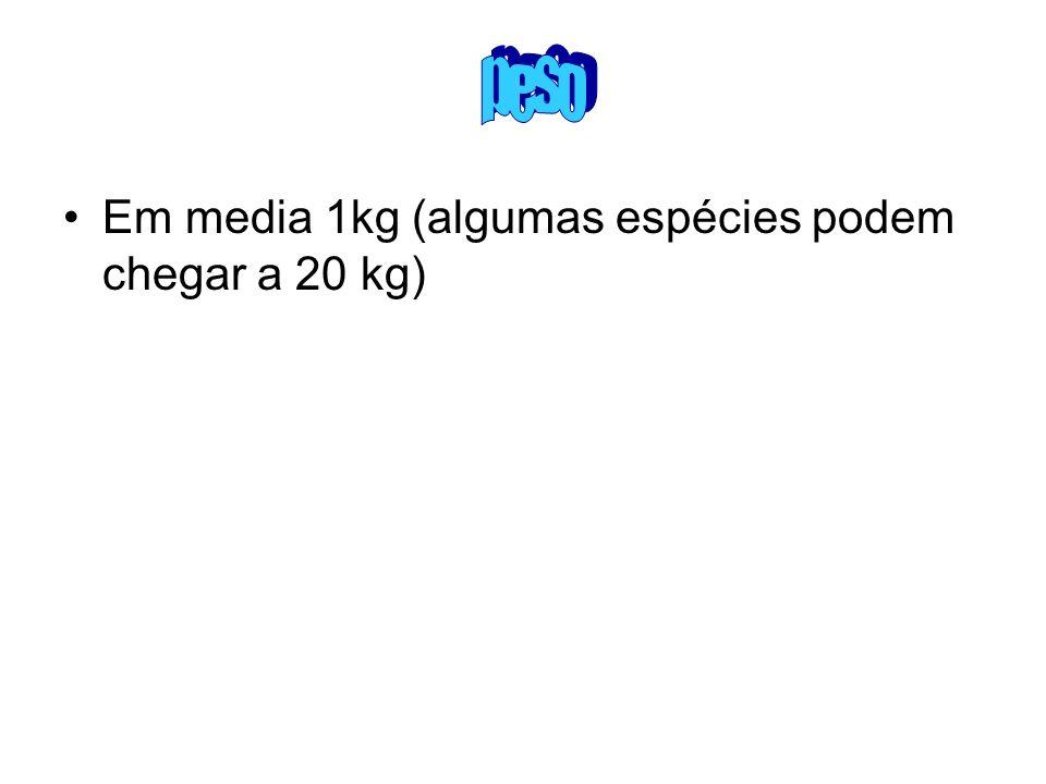 Em media 1kg (algumas espécies podem chegar a 20 kg)