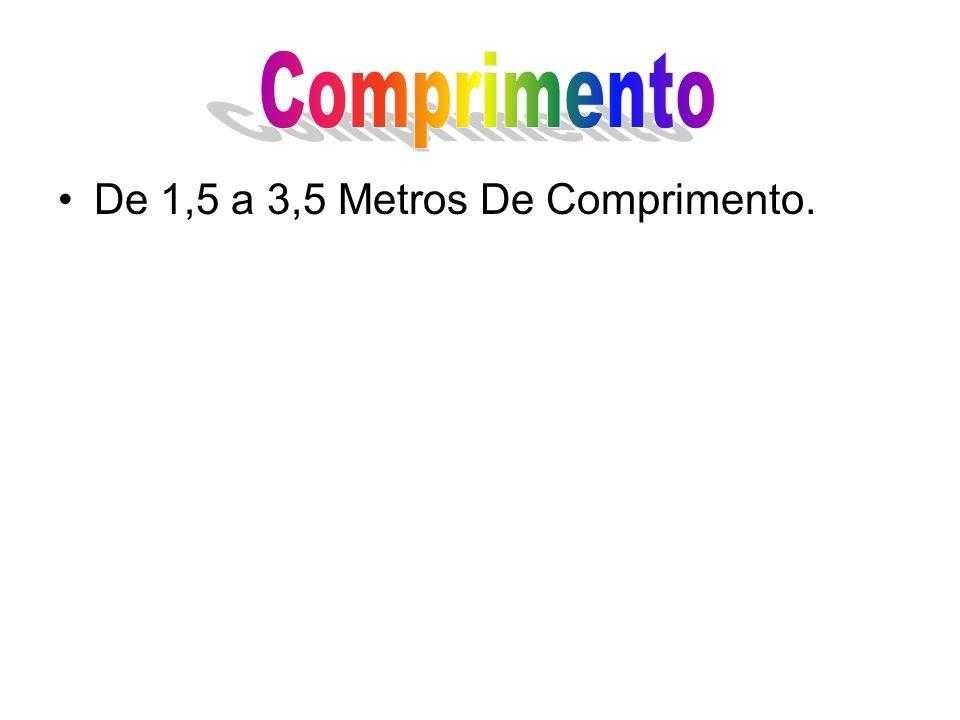 De 1,5 a 3,5 Metros De Comprimento.
