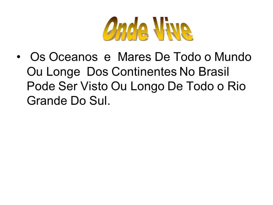Os Oceanos e Mares De Todo o Mundo Ou Longe Dos Continentes No Brasil Pode Ser Visto Ou Longo De Todo o Rio Grande Do Sul.