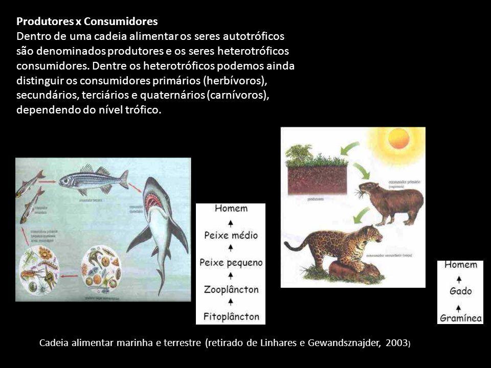 Produtores x Consumidores Dentro de uma cadeia alimentar os seres autotróficos são denominados produtores e os seres heterotróficos consumidores.